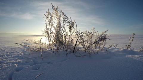 Sun shining through grass stalks in winter's field, time lapse 4K Footage