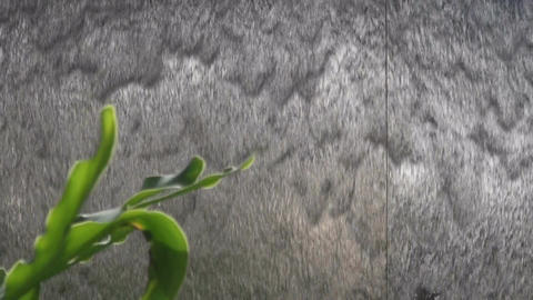 Artificial steel waterfall with green plant Footage