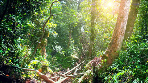 Bright sunlight illuminating depths of Malaysian tropical mossy rainforest Footage