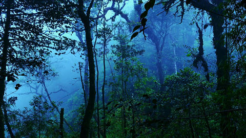 Mysterious landscape with grim exotic jungle covered with fog. Enchanted forest Live Action