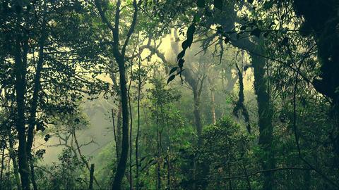 Enchanted foggy forest full of lush vegetation. Beautiful nature, gloomy jungle Footage