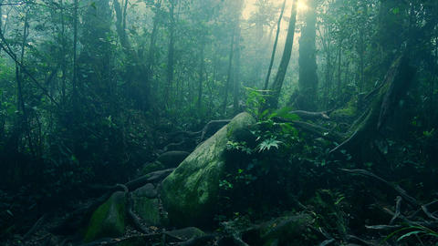 Mystical landscape with mossy stone lying in foggy forest among tree roots Footage