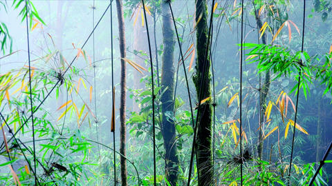 Fantastic landscape with thin trunks of exotic trees and bamboo at dense mist Footage