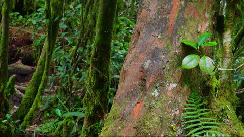 Dense thicket of exotic plants and trees covered with thick green moss Footage