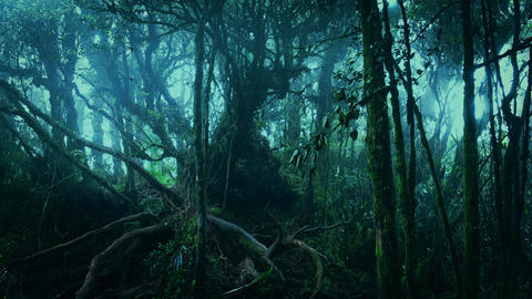Gloomy tropical forest shrouded in mist and overgrown with mossy trees Footage