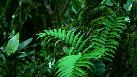 Beautiful tropical ferns, shrubs and trees covered with green moss Footage