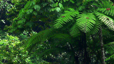 Mysterious tropical rainforest full of shrubs, ferns and trees. North Sumatra Footage