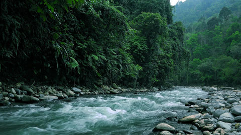 Magical landscape of mountainous jungle with thick vivid vegetation. Sumatra Footage