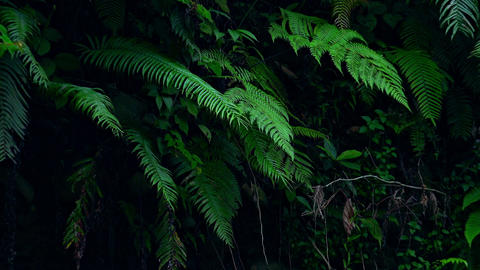 Enchanting scenery of wild tropical flora and fast... Stock Video Footage