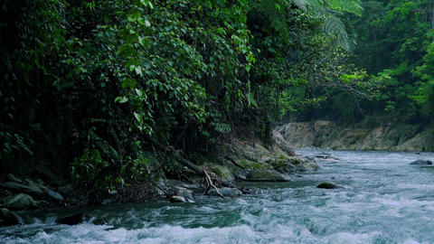 Mountain river flows over wet boulders among tropical jungle. Amazing riverscape Footage