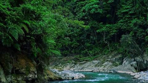 Breathtaking landscape of rainforest growing on high altitude. Sumatra Footage