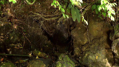 Sunbeams play on walls of cave overgrown with curved roots of tropical plants Live Action