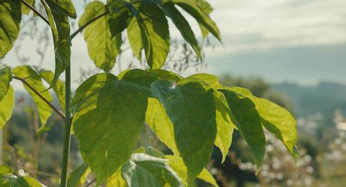 Green bush Footage
