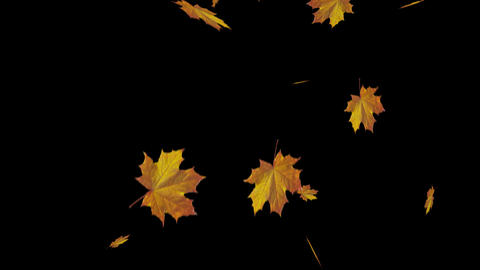 Falling maple leaves with alpha channel Animation