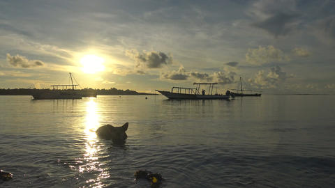 Dog. Morning Mafia island. Tanzania. Of the Indian ocean Footage