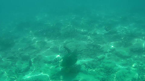 UNDERWATER Sea turtle swimming over corals Footage
