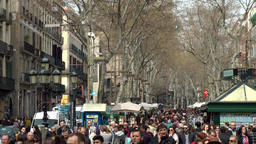 Spain Barcelona 030 crowd of people under bare plane trees of La Rambla Footage