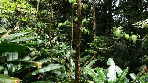 Gliding through caribbean rain forest on saint lucia island Footage