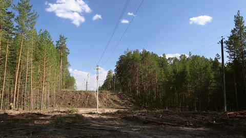 Power lines in the forest Footage