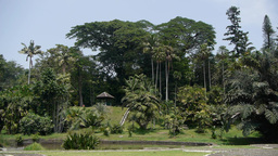 Botanical Gardens,Bogor,Java,Indonesia stock footage