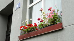 window with flowers exterior - House - house number Footage