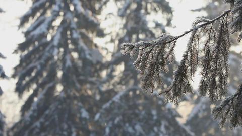 Winter day landscape Footage