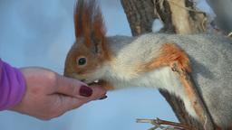 Squirrel eating seeds Footage