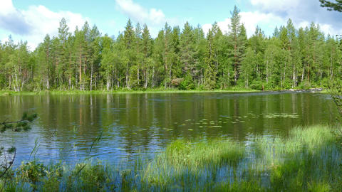landscape with river and forest in Karelia, 4k Footage