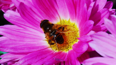 Fly on Flower Footage