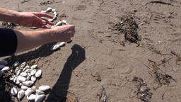 "Writing with shells: ""beach"". Time lapse Archivo"
