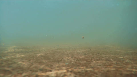 Underwater sea surface flow Footage