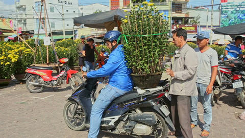 Man Fixes Chrysanthemum Pot on Motorcycle Back Seat Footage