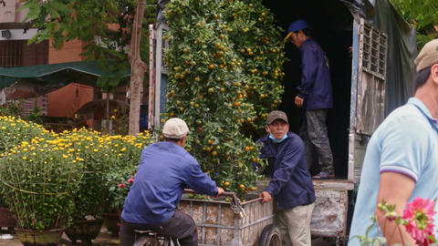 Workers in Blue Uniform Load Tangerine Tree into Truck Footage