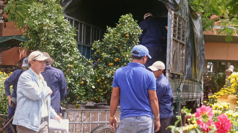 Workers in Blue Load Tangerine Tree in Pot into Lorry Footage