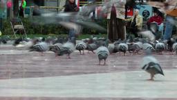 Spain Barcelona 043 many doves and walking legs on Plaça de Catalunya Footage