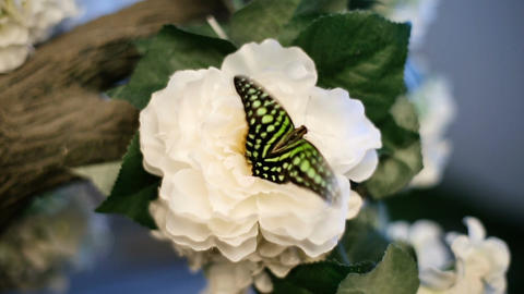 Black And Green Butterfly On Flower Footage