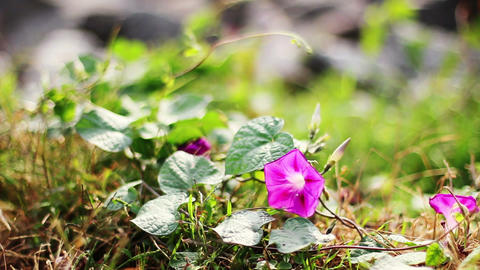 Wild Flowers Footage