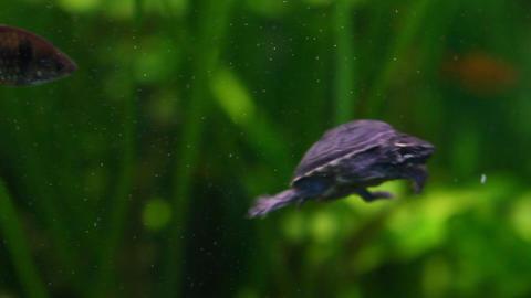 Rare Turtle 2 Live Action