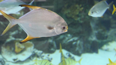 Aquarium Fish 12 Footage