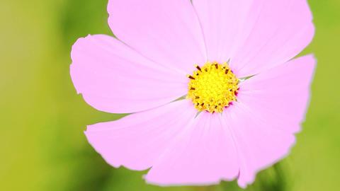 The Macro Flower Footage