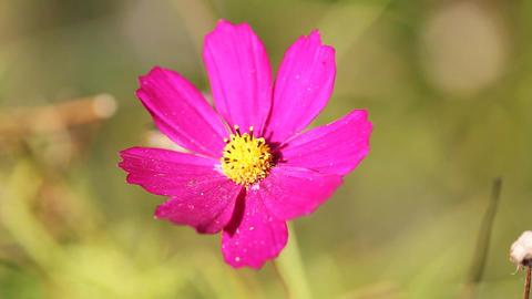 Macro Flower Background 3 Footage