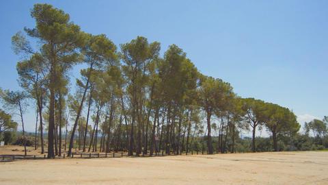 Tree Cutdown Site Stock Video Footage