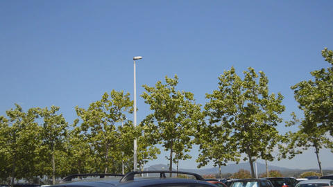 Trees At A Parking Lot Footage