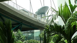 Singapore 008 ferris wheel spokes and exotic plants Footage
