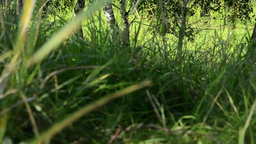 green grass with trees - hill - meadow of grass - sun rays - slider - focus on b Footage