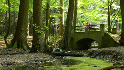 nature - forest (trees) with bridge and the suns rays - brook - old couple walki Footage