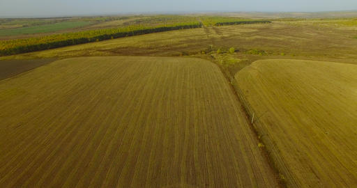 Flying above fields Live Action