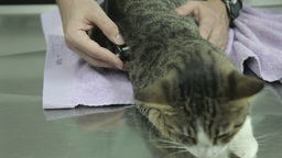 MVI 0699 Cat examination by vet Footage