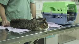 MVI 0698 The pets clinic treatment room Footage