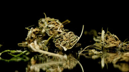 Medical drug marijuana pot weed buds falling onto mirror black background Footage